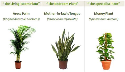 Best Indoor Plants For Oxygen by Fresh Air The Natural Three Plant Air Purifying System