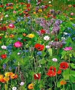 Wildflower Backyard by Wildflower Garden From Seeds Garden Ideas