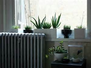 Small Plants For Window Sill The World S Most Adorable House Plant Remodelista