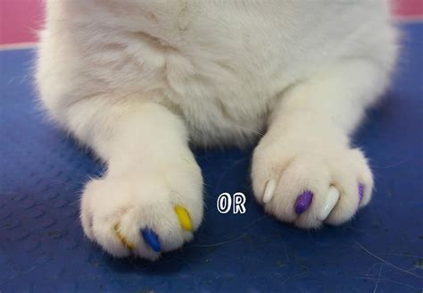 soft paws nail caps lexie s and cat grooming