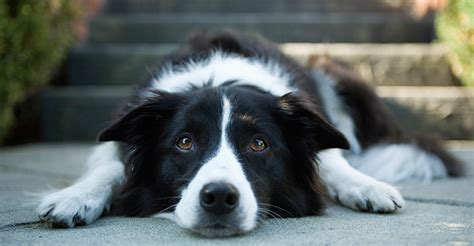 dogs and seizures study shows homeopathy treats epilepsy and seizures in dogs dogs naturally magazine
