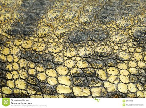 skin closeup stock images royalty free images vectors crocodile skin up stock photos royalty free images