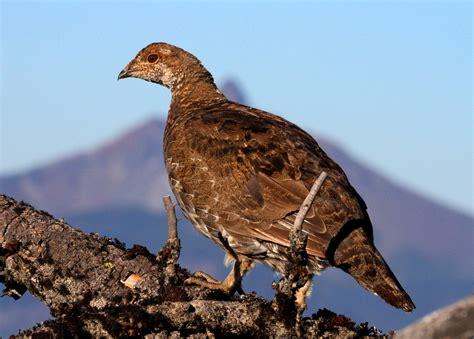 sightings birding oregon