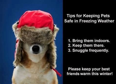 9 Tips On Keeping Your Outside Pet Safe From The Cold by Keep Your Pets Warm This Winter Pets Pets Pets