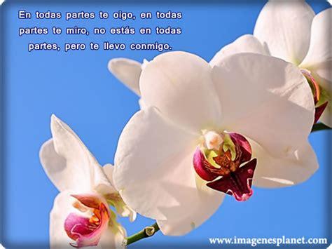 imagenes con frases bonitas y flores imagenes de rosas y flores de amor con frases para