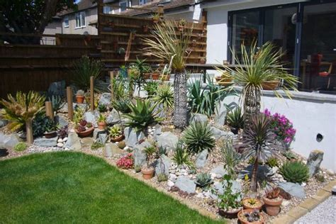 piante grasse in giardino giardino roccioso piante grasse decorazioni per la casa
