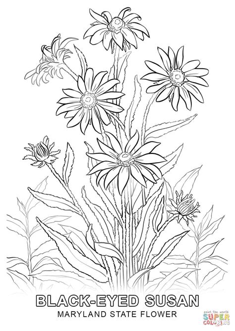 Maryland Search Free Maryland State Flower Coloring Page Free Printable Coloring Pages