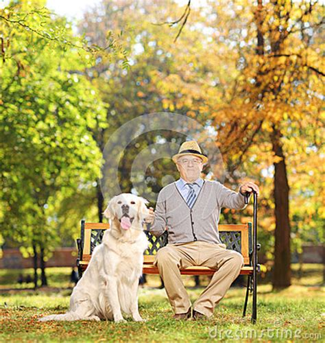 bench labrador retriever senior man sitting on a bench with his dog in a park