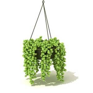 hanging plants cgtrader com