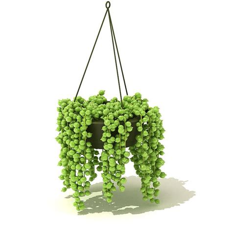 hanging plant cgtrader com