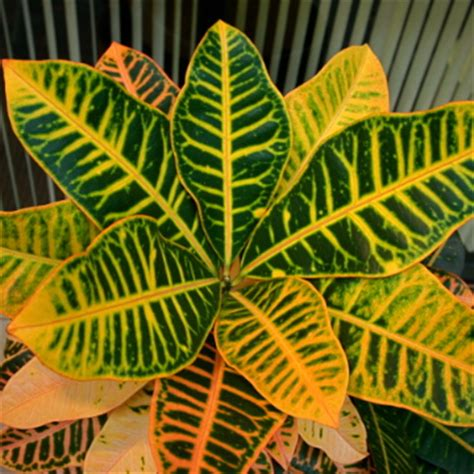 Houseplants For Low Light Areas by Improve Office Morale And Productivity With Indoor Plants