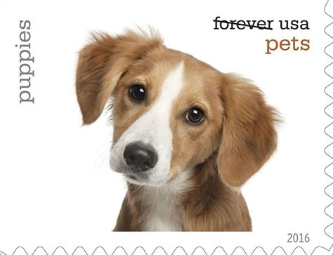 pet dogs images u s postal service unveils new pets forever postage