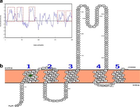 protein localization analysis of protein localization a hydrophobicity profile