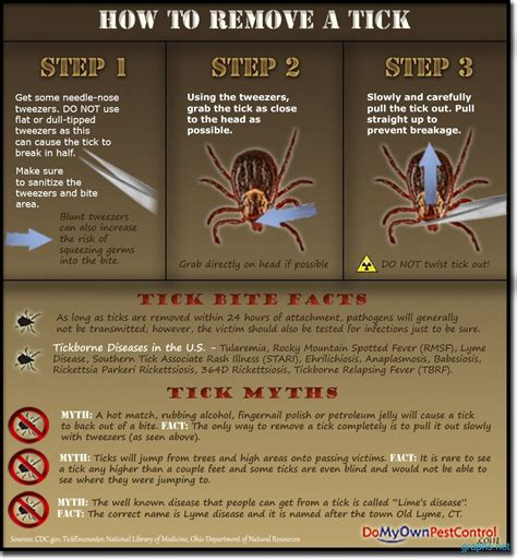 tick removal from tick removal process infographics graphs net