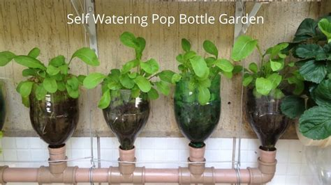 indoor plant watering system unique planters from soda bottles a bottle garden the incredible self watering pop grow system
