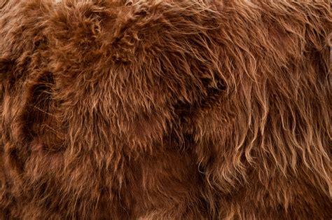 Fur Coat Wallpaper