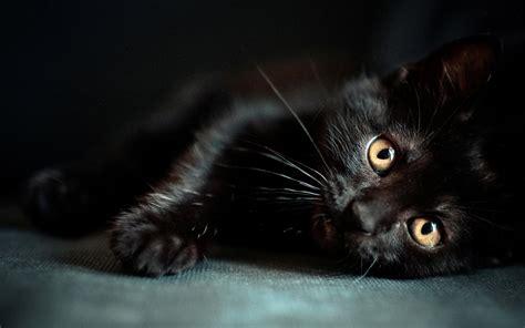wallpaper cute black cute black cat wallpaper pc wallpapers litle pups