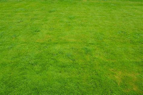 lawn grass green 183 free photo on pixabay