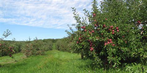 apple england nothing beats a mcintosh apple new england apples