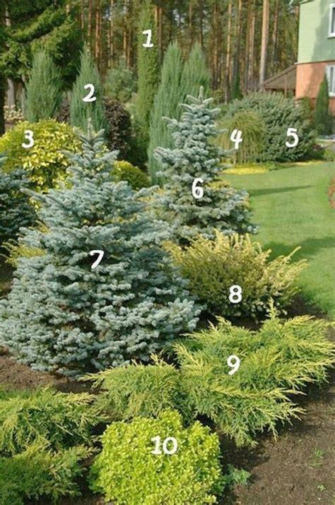 25 best ideas about evergreen evergreen garden modern style home design ideas