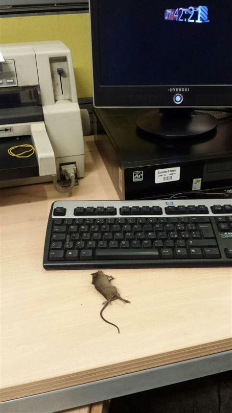 roma ufficio anagrafe roma un quot mouse quot sulla scrivania dell anagrafe ma il topo