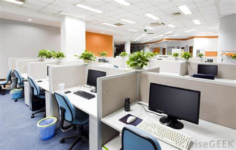 best office what are the best office plants with pictures