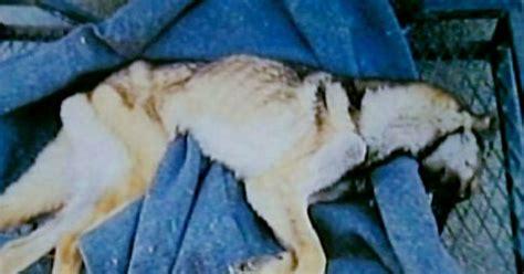 months  starving  dog  death