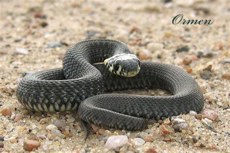 wallpaper black mamba snake cool hd nature desktop wallpapers black mamba snake