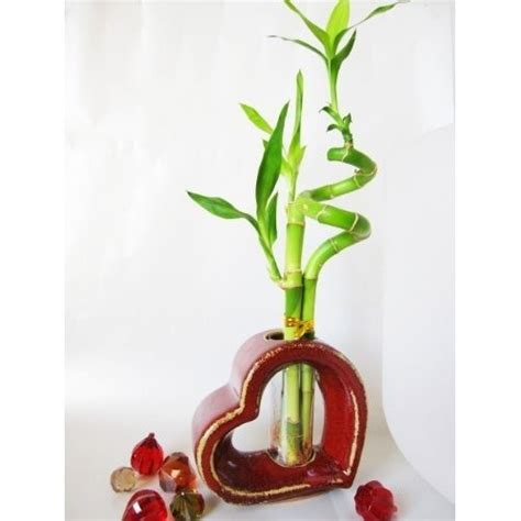 Vase For Bamboo Plant by 1000 Ideas About Lucky Bamboo Plants On