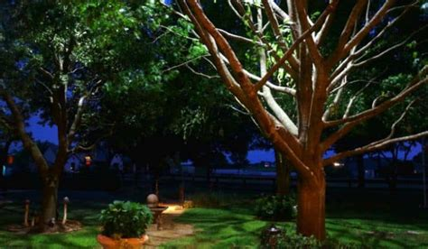 for u outdoor landscape lighting ideas trees lighting ideas for trees u landscape low voltage landscape lighting styles trees gardens planters sa landscaping