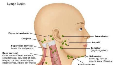 dolore interno scapola sinistra linfonodi collo ingrossati quali sono le cause