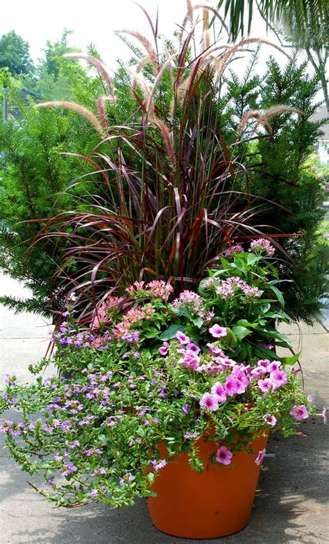container garden petunias and grasses on pinterest