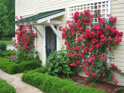 trellis roses grow climbing roses add style to your garden