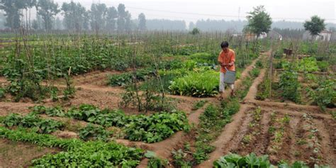 un report says small scale organic farming only way to feed the world grid world un report says small scale organic farming only way to feed the world huffpost