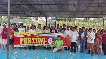 Bibit Jagung Pertiwi 6 mantap jagung pertiwi 6 di simalungun sumut benih pertiwi