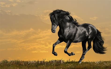 wallpaper hd horse horse full hd wallpaper and background image 2560x1600