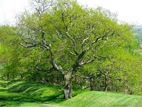 pretty trees daily meditations beautiful trees