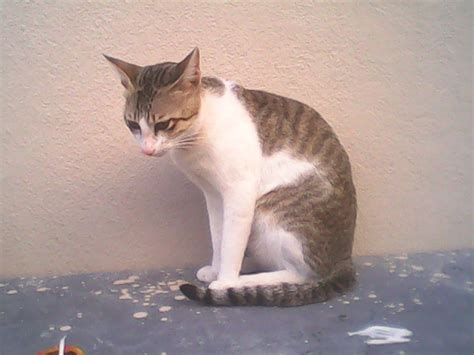 file sitting cat 2 jpg wikimedia commons