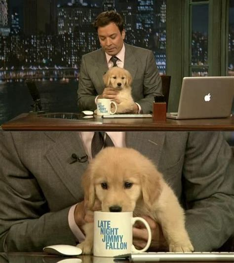 jimmy fallon puppies pin by phylis parsons on just this
