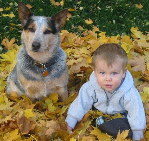 best kid friendly dogs 20 best kid friendly dogs around the world