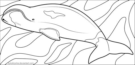 bowhead whale coloring page bowhead whale lineart by sykoticorka on deviantart