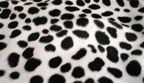 unavailable listing on etsy dalmatian spots wallpaper wallpapersafari