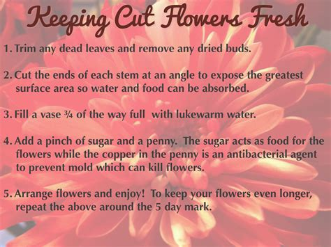how to keep flowers fresh overnight domestic goddess keeping cut flowers fresh lady in charge