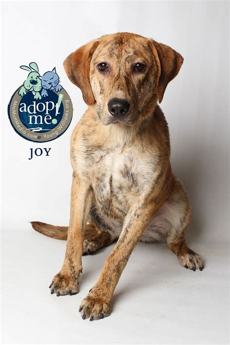 puppies for adoption knoxville tn pin by jennie huettel on shelter pets