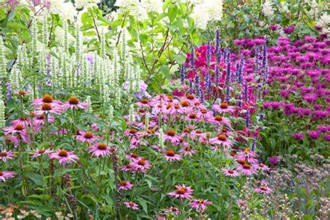 a cheerful border idea with monarda agastache and echinacea