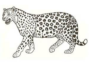 pictures to colour leopards