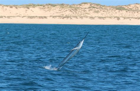 fishing boat hire exmouth exmouth boat hire exmouth fishing report exmouth boat hire