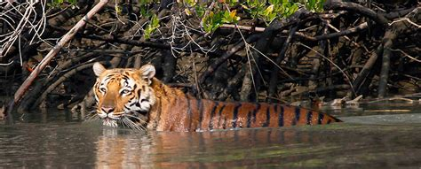 top  famous tiger reserves  india