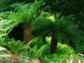 fern garden yewbarrow house and gardens