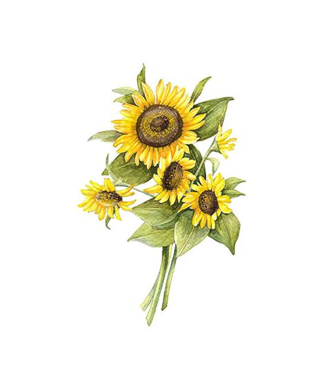 Home Decor Express by Sunflower Floral Botanical Print By Watercolorsbymonika On
